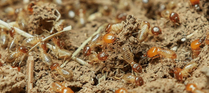 termite swarm outside of house