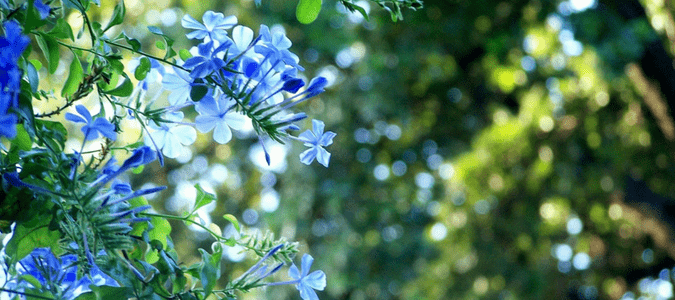 Best time to water plants in hot weather