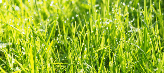 How Often To Water Lawn In Summer Abc Blog