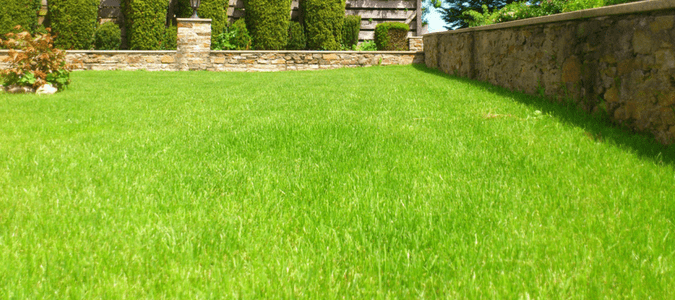 How to keep grass green in hot weather