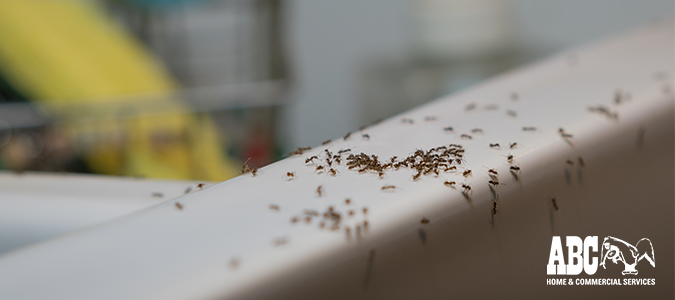 common summer pests, fire ants