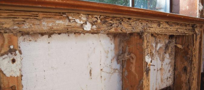 Concrete termites