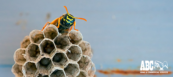 Getting Rid of Wasps for Summer Fun