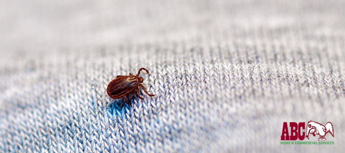 spotting Lyme disease from ticks