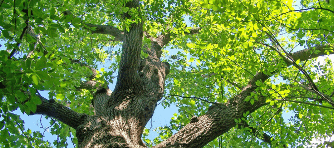 Best trees for Central Texas