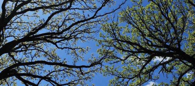 Do ticks live in trees