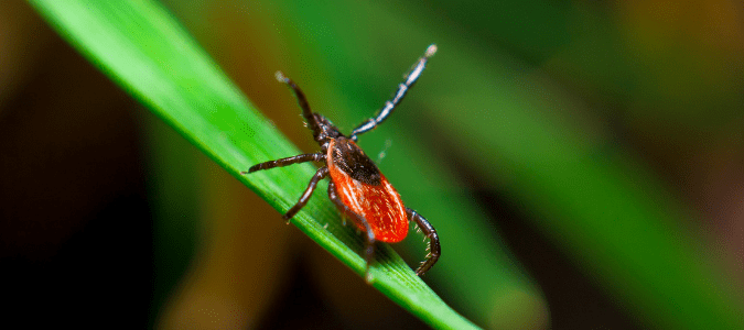 How long do ticks live without a host