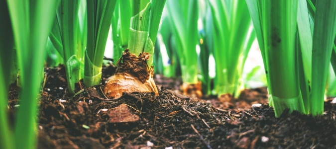 Planting in compost without soil