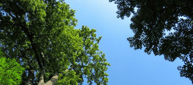 Tree thinning methods