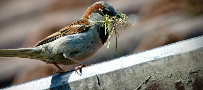 How To Stop Birds From Building Nests In Gutters