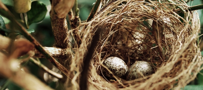 How to keep birds from making nests in unwanted places
