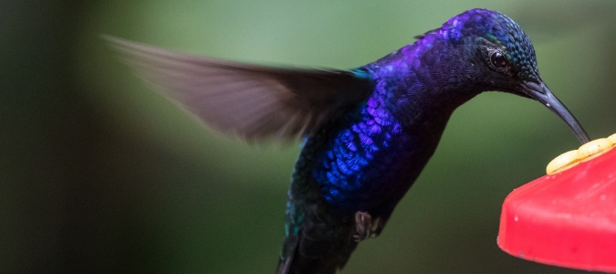 When To Stop Feeding Hummingbirds For The Year Abc Blog