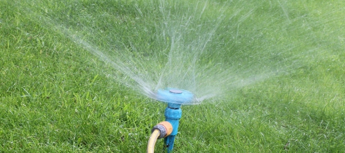 When To Apply Fungicide On Lawns: Experts Weigh In | ABC Blog