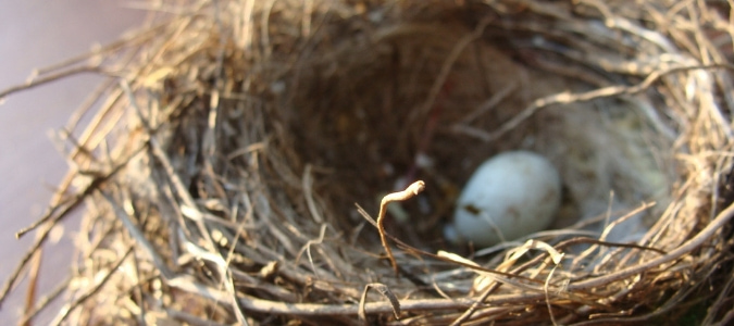How To Stop Birds From Building Nests In Gutters Abc Blog