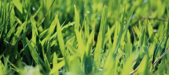 list of fungicides and uses