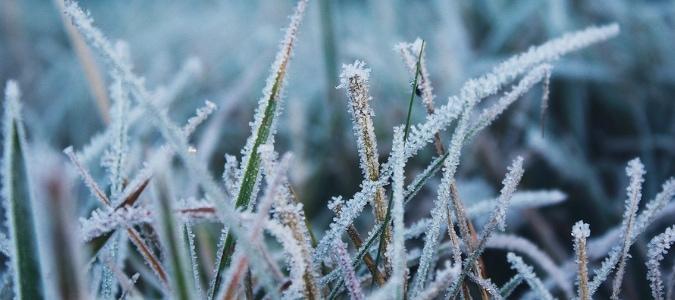 grass height for winter