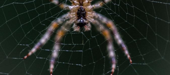 texas spiders