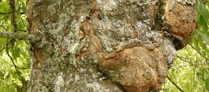 dying tree symptoms