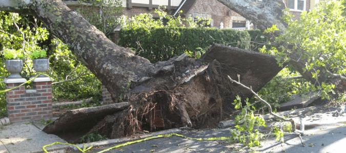 tree falling warning