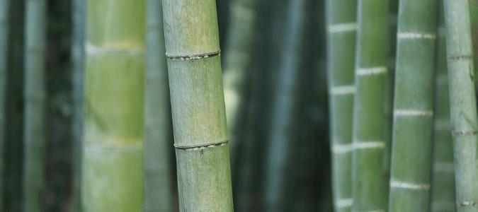 Do termites eat bamboo