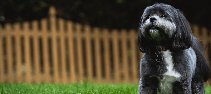 Dog friendly backyard