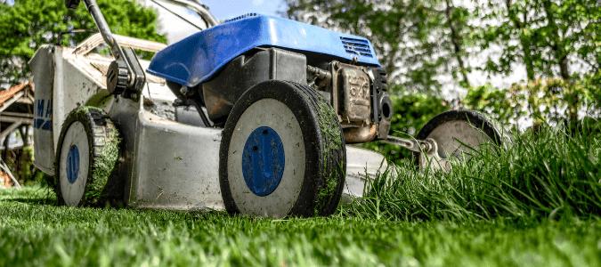 How short to cut grass in summer