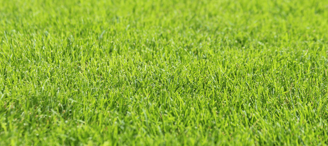 How to keep lawn green in summer heat