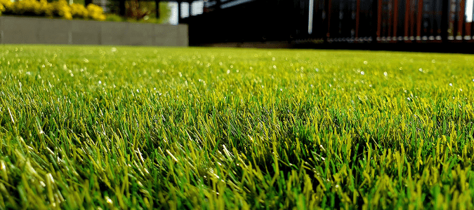 What type of grass is most resistant to dog urine