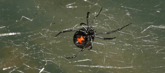 Most Common Florida Spiders In Homes And Yards | ABC Blog