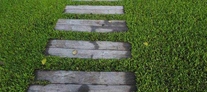 St. Augustine Grass Fungus
