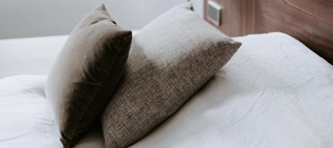 Bed Bug Shells