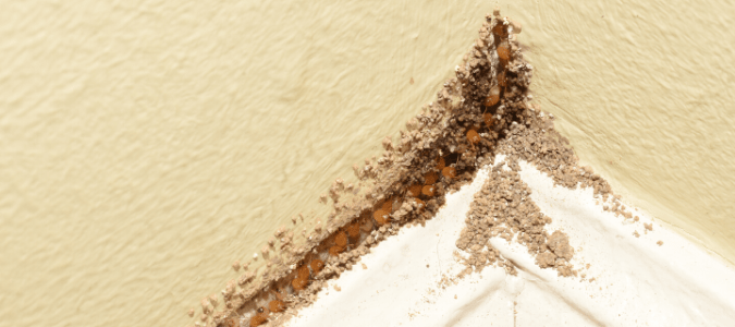 Termites eating away at a wall