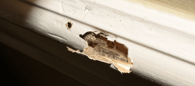 A baseboard with termite damage