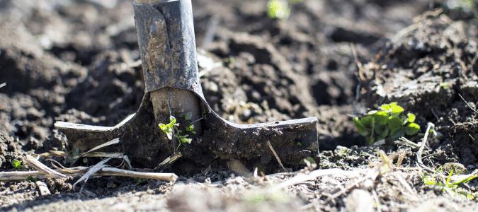 A shovel going into moist soil