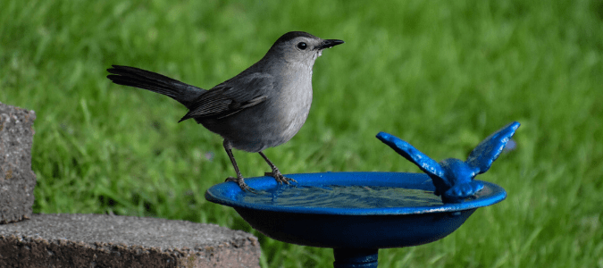 A bird resting on a bird bath