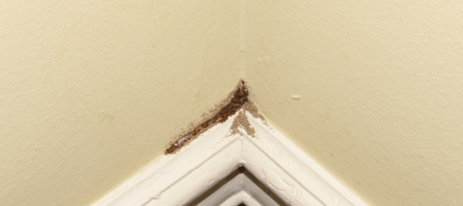 Tube of termite frass on a baseboard