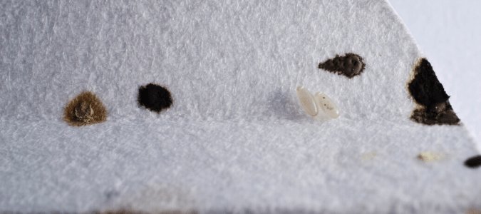 Bed bug feces on white fabric