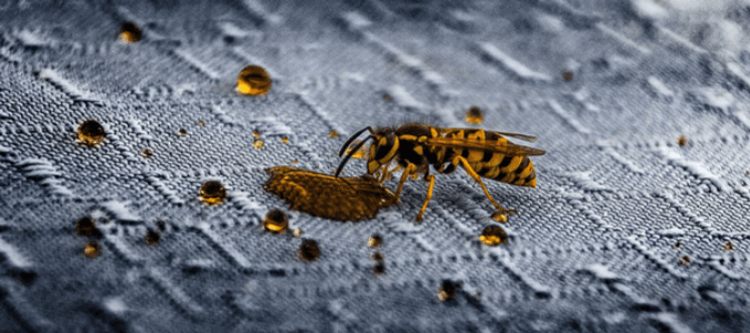 A wasp consuming spilled juice
