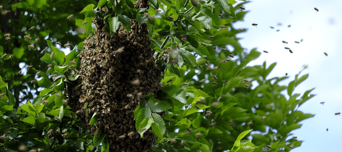 A bee hive