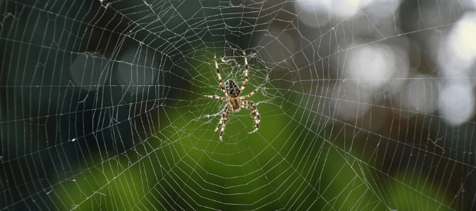 A brown and white striped spider sitting on a web