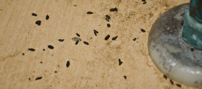 Mouse droppings in a bathroom cabinet