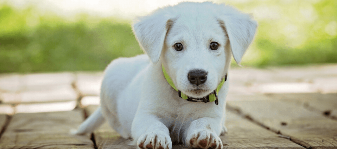 a puppy with fleas