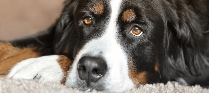 a dog with fleas
