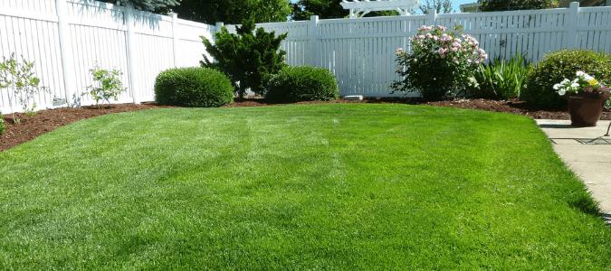 a well kept lawn