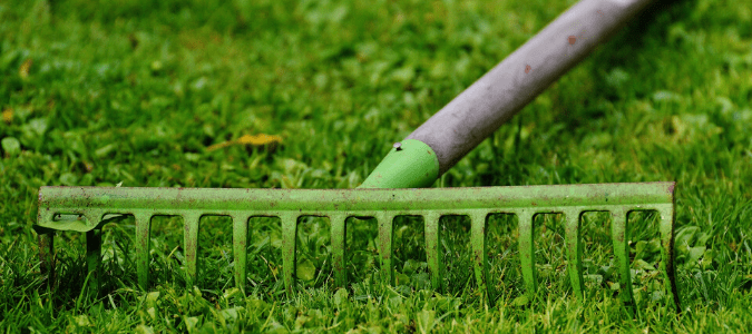 a homeowner raking the lawn before doing a fall lawn treatment