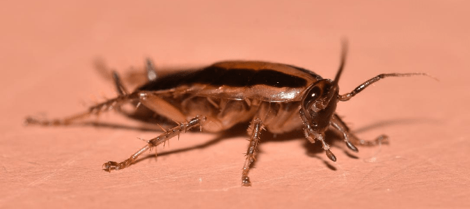 A cockroach on a person's skin.