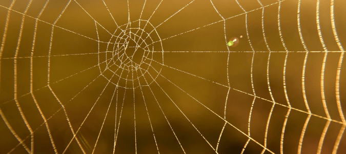 an empty southern house spider web