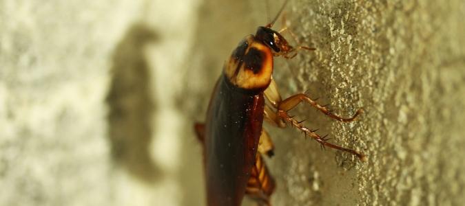 a cockroach climbing up a wall