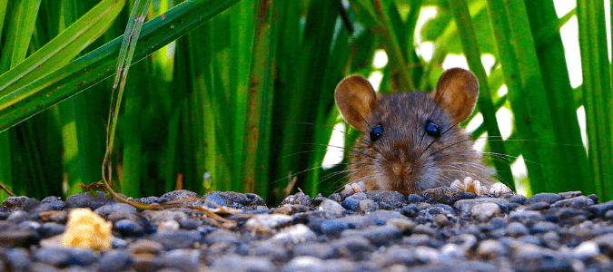 a mouse in a yard