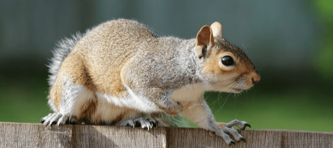 a squirrel on a wooden fence